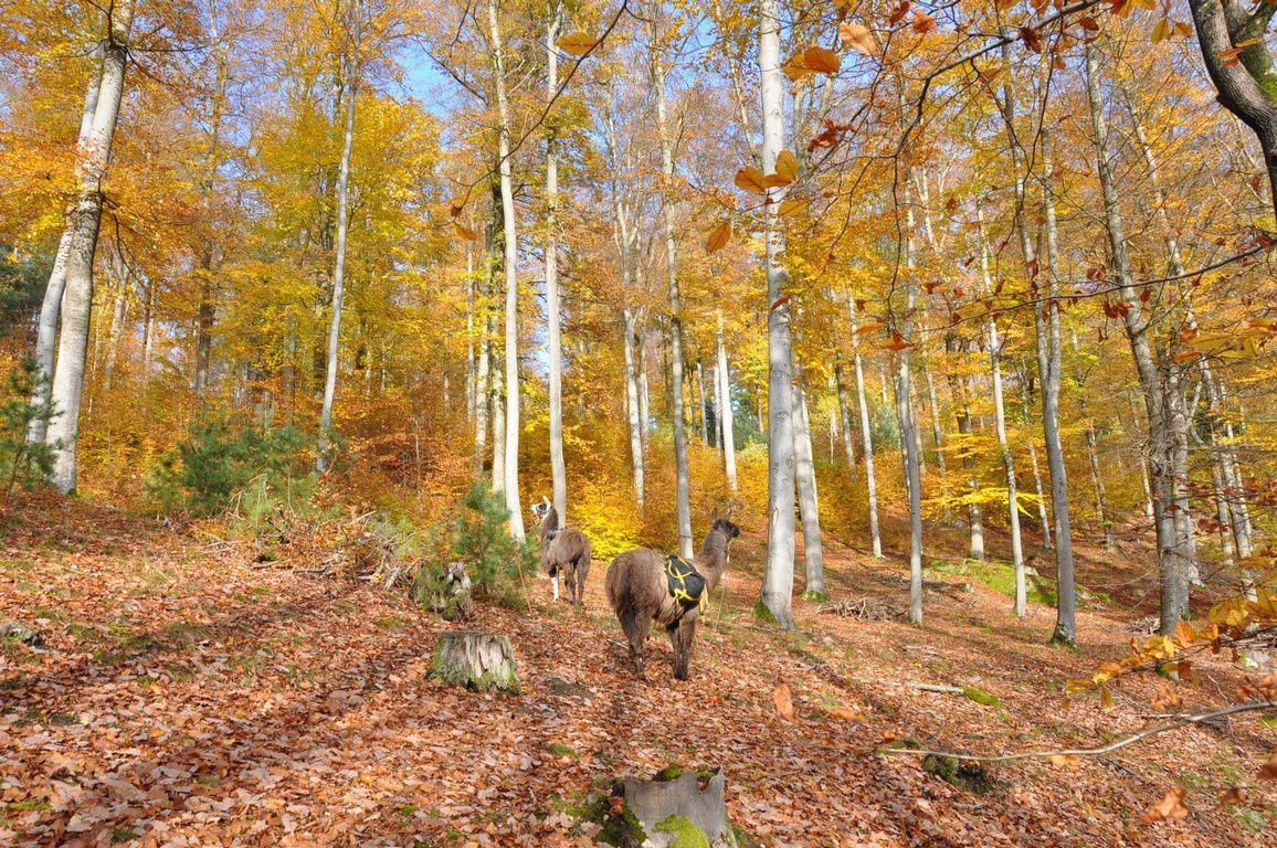 Retour par le versant de crête ensoleillé....et ses coloris d'automne fastueux.