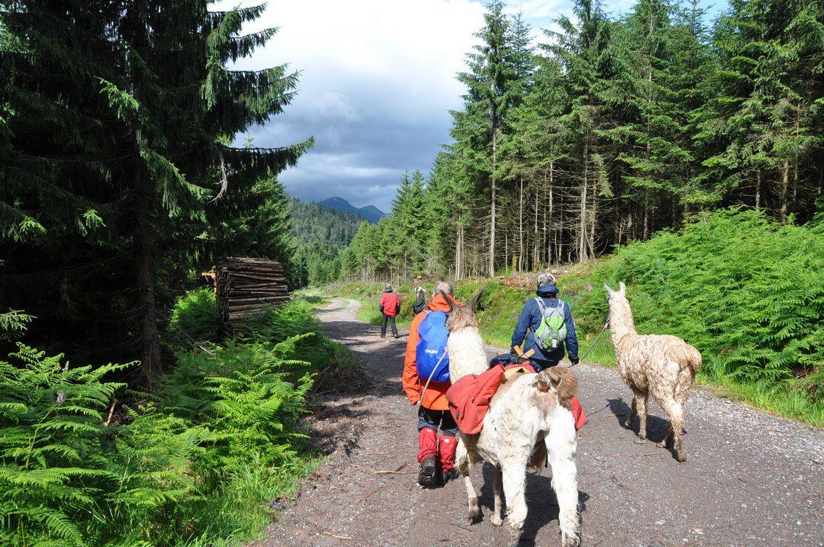 Une Année de randonnées dans le Massif Vosgien - 2016