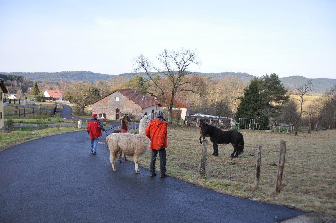 Après les vaches , des chevaux .....on aura tout vu !
