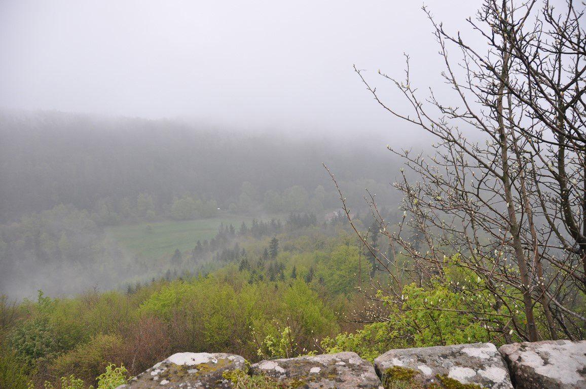 La vue hélas très limitée au sommet du château et un bourgeon, mais de quel arbre ..?
