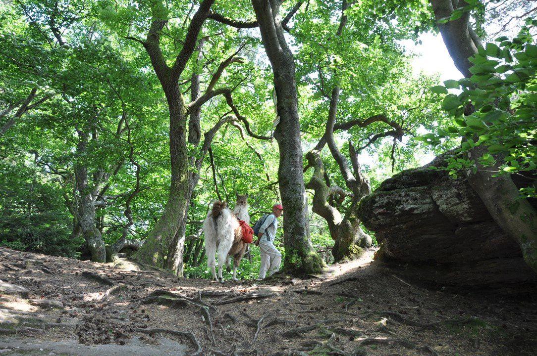 La montée au sommet de la grotte du Brotsch