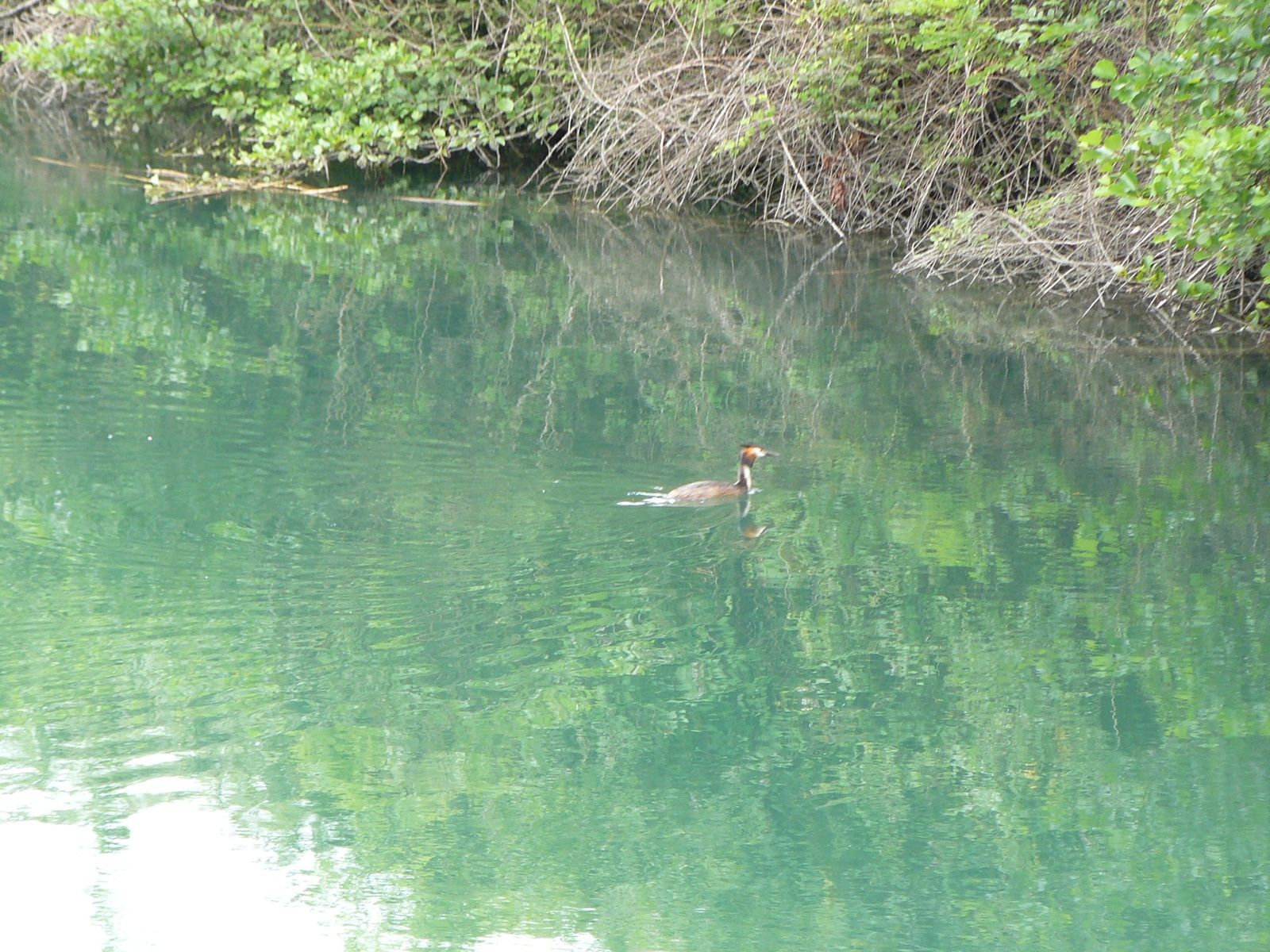 le canal de Savières