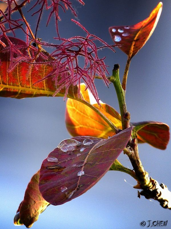 &quot&#x3B;Perles d'automne&quot&#x3B;