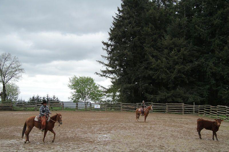 Quelques photos du week end avec de beaux moments, parfois mouvementés avec des vaches sur le qui vive! Des chevaux qui débutent, d'autres moins, des cavaliers qui débutent, d'autres moins bref du travail d'amateur pour le moment, mais ça évolue!
