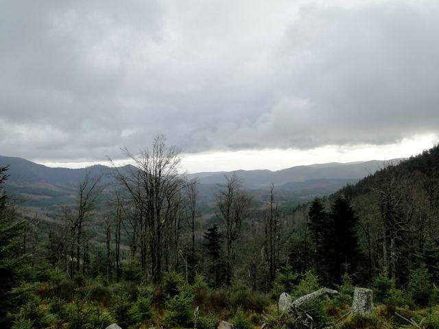 Nous allons aujourd'hui explorer la forêt domaniale d'Abreschviller le long du sentier des bornes.  Ce sentier long de 47km permet de découvrir le magnifique bornage armorié qui limitait dès 1758 les possessions du Prieuré bénédictin de saint-Quirin.