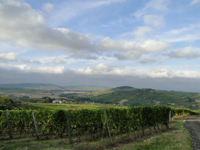 Nous sommes dans le vallon entre le Jesselsberg et der Berg avec une belle vue sur le Scharrach.