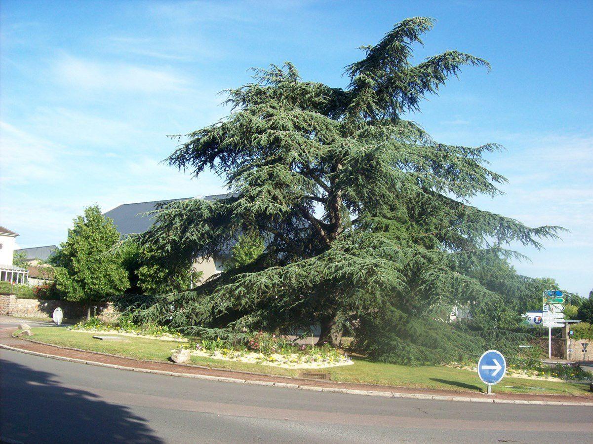 Carrefour de la Croix-Verte  - 71400 Autun.