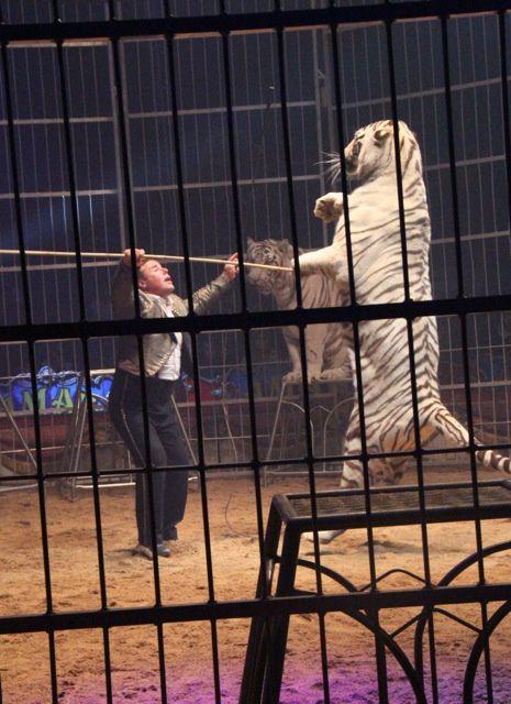 Représentation publique du cirque AMAR. 1er partie. ¤¤¤ Photos du site Autun-info - Mr Bastien Migault ¤¤¤
