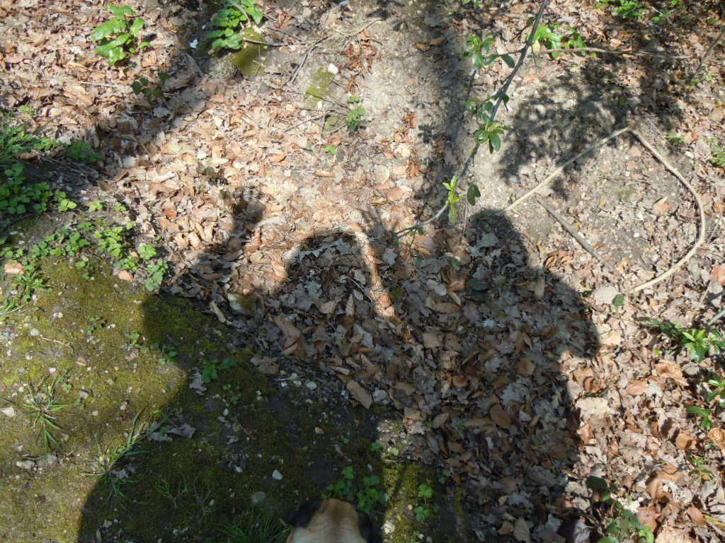 Bizare, Bizare ces ombres  &#x3B;@)
