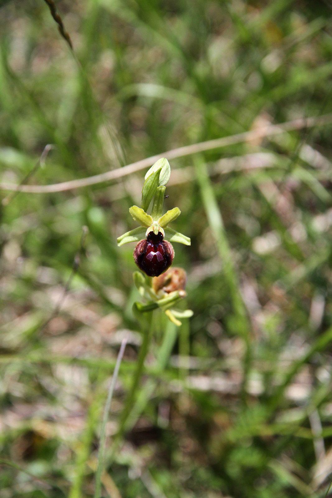 Orchidées passion en Berry.Canton de Chatillon sur Indre