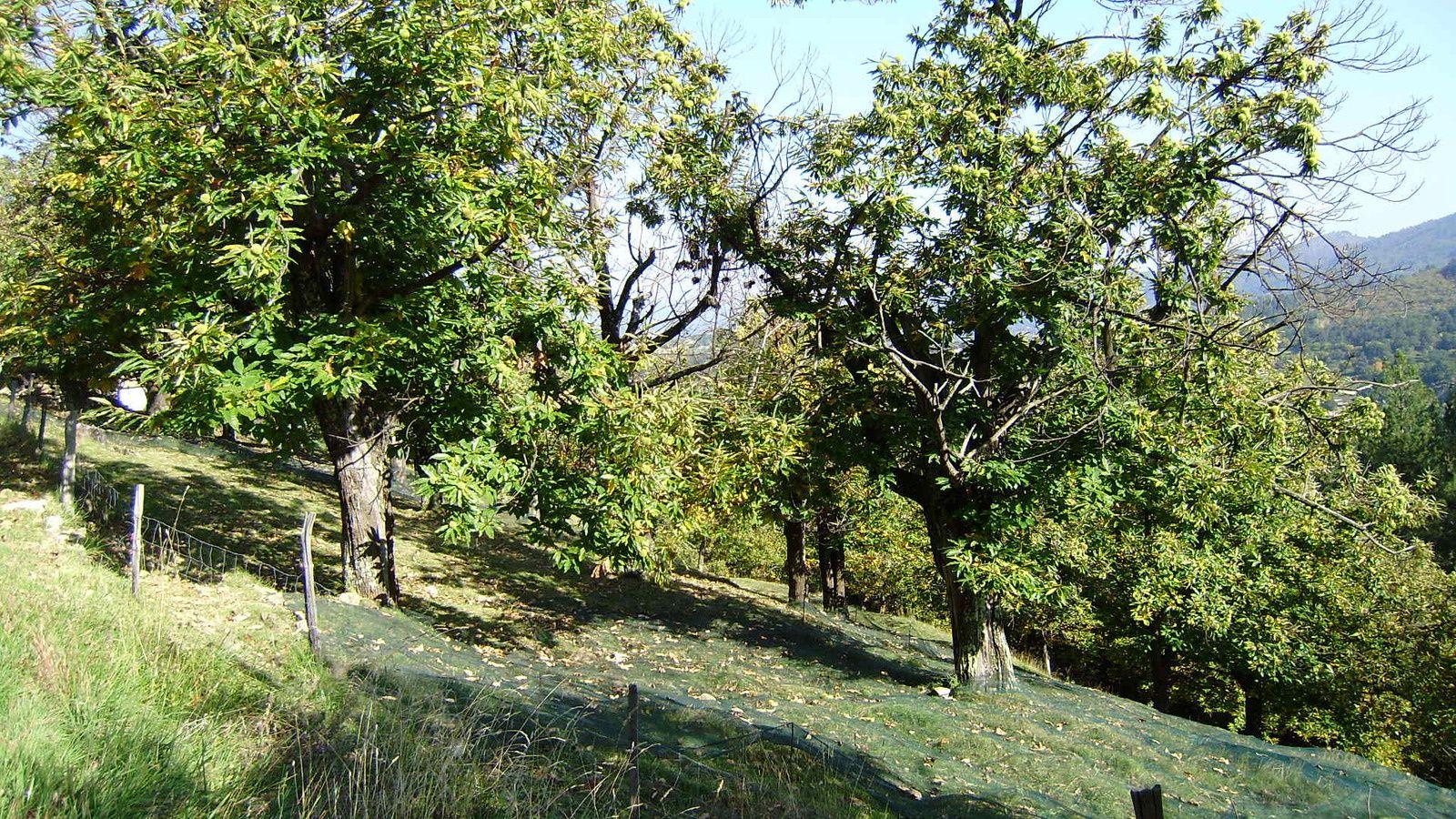 Châtaigneraie du Fau: des terres agricoles cultivées et entretenues, pour une optimisation de la récolte