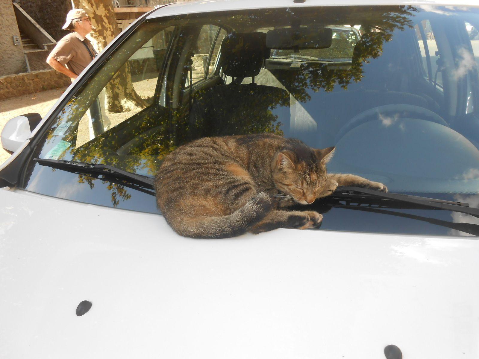 Milka, pas très affectée par son aventure au milieu des cyclistes