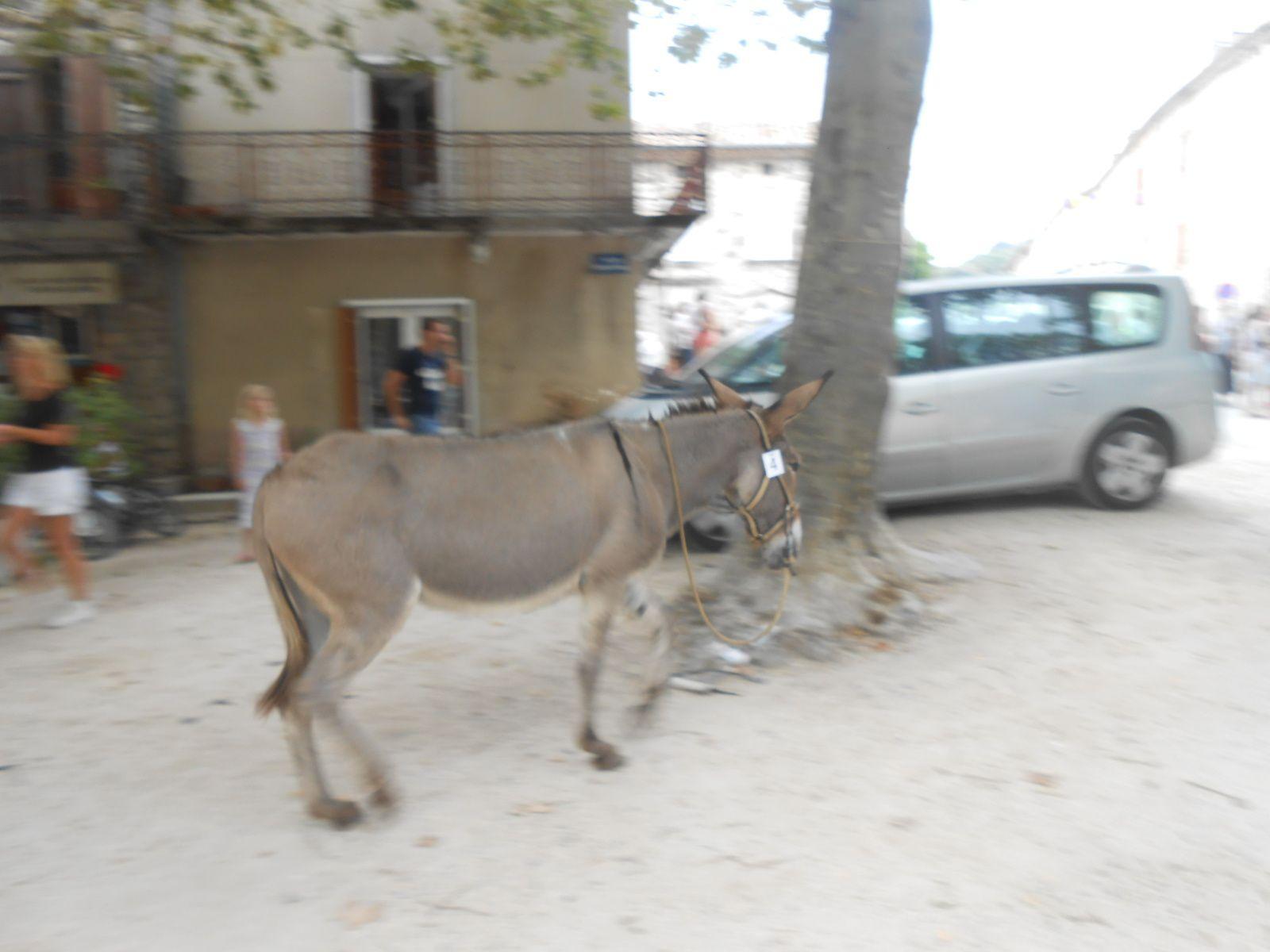 Gamelle et âne errant sans cavalier: incontournables péripéties de course