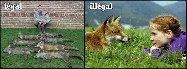 Illégal et légal ? Société mafieuse et hypocrite ! Tuer c'est légal&#x3B; sauver, protéger et détenir un animal sauvage c'est illégal. Décision des troudukus qui se nomment lait-gis-délateurs !