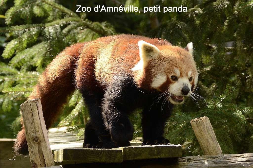 02- Lorraine, zoo d'Amnéville du 2 au 4 septembre 2014 et Champagne-Verzy-Der octobre 2015
