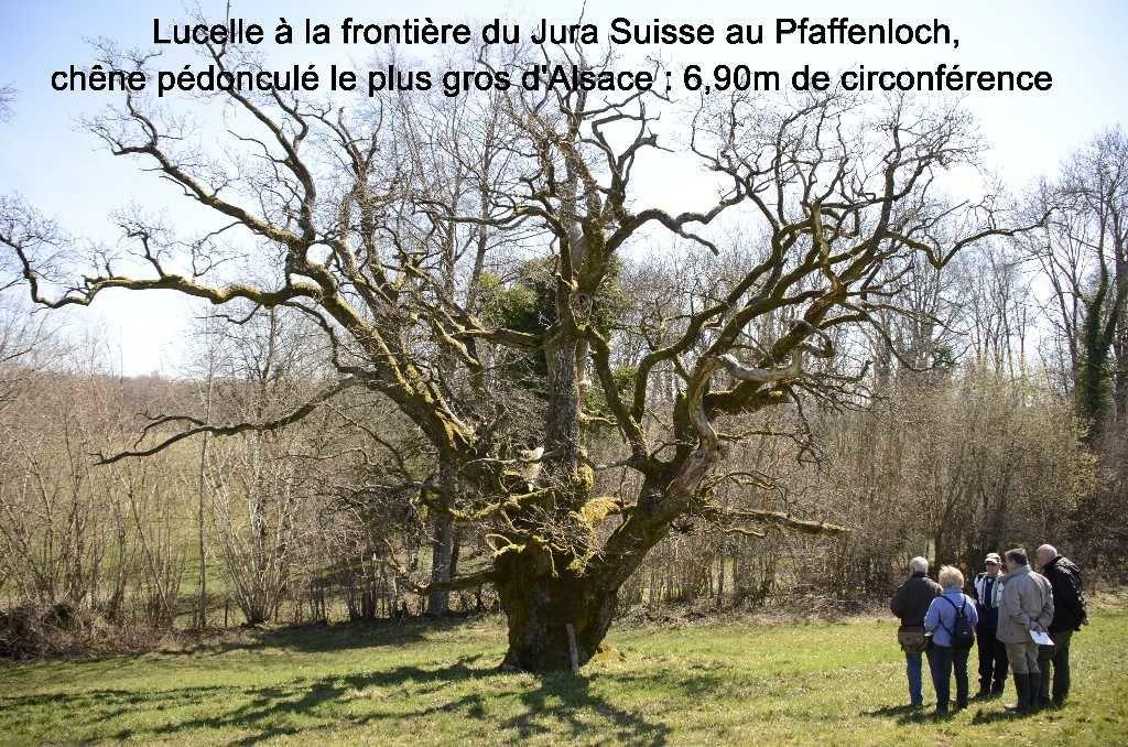 Alsace entre Suisse et Allemagne