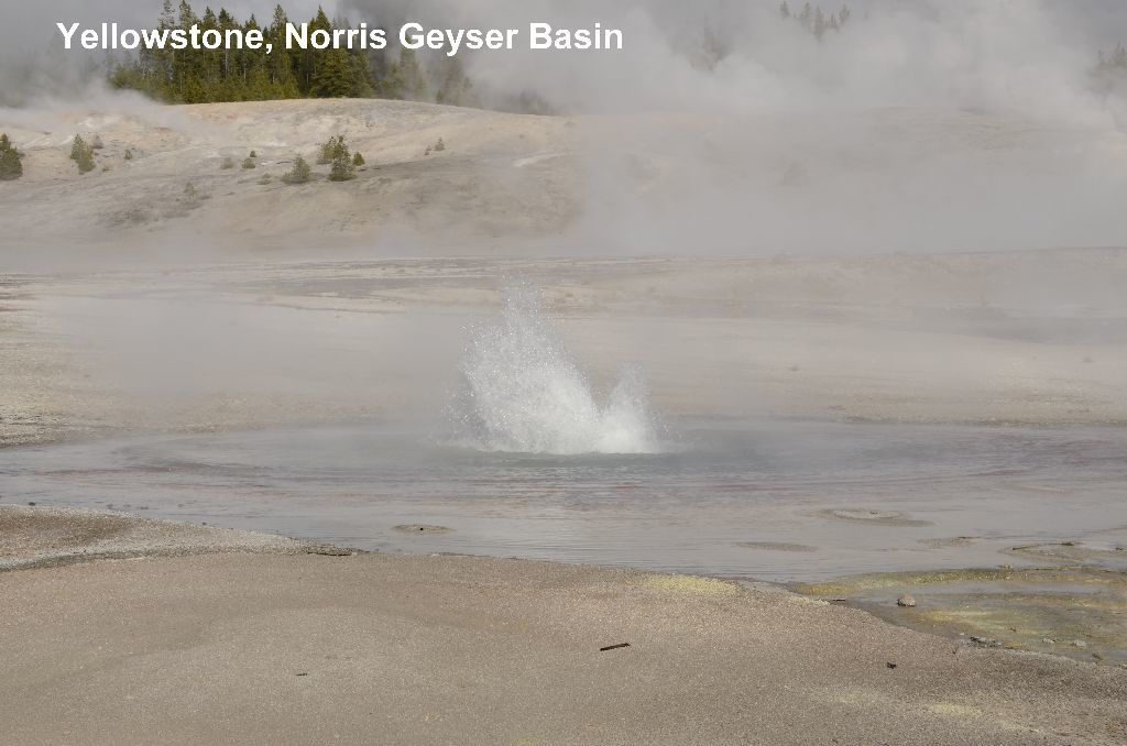 Yellowstone National Park, geysers et bisons