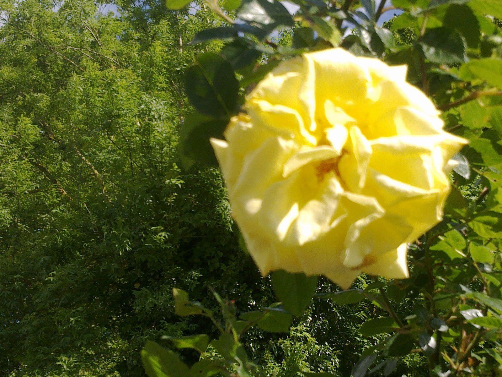 Textoésies et vous : Rose vive, rose nue