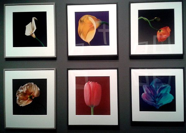Robert Mapplethorpe au Grand Palais