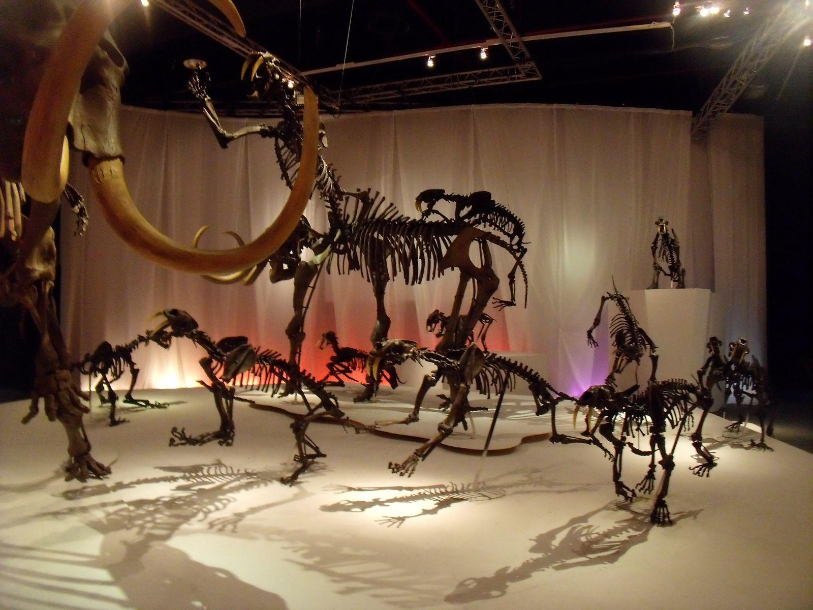 À la rencontre des mamouths !