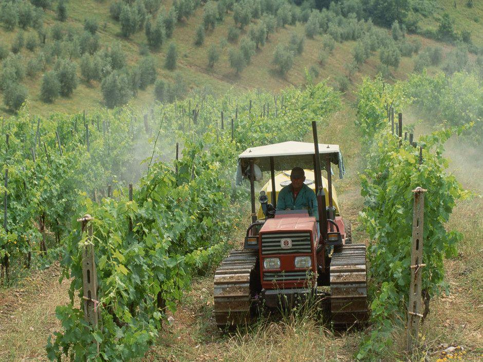 Même interdits, certains phytosanitaires, sont employés, ainsi que des contrefaçons, que risquent les contrevenants ?
