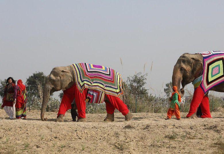 DES PULLS POUR DES ELEPHANTS INDIENS en UTTAR PRADESH!