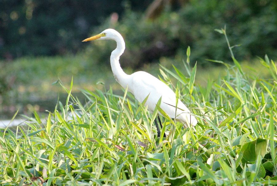 Oiseaux des backwaters