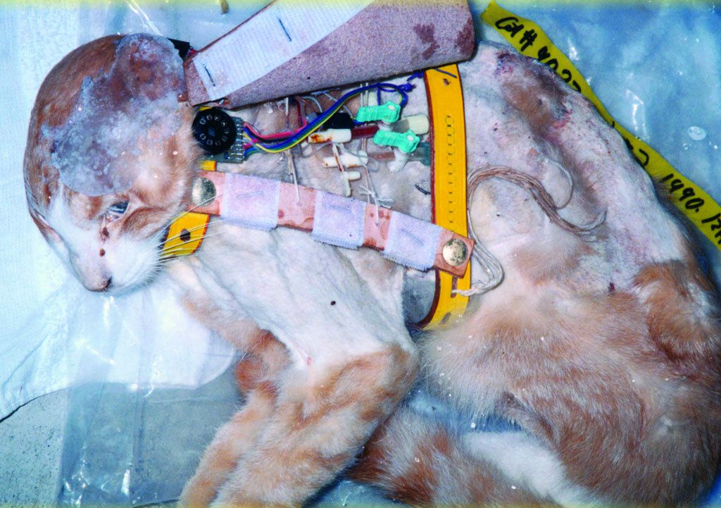 STOP VIVISECTION: ON VA Y ARRIVER!