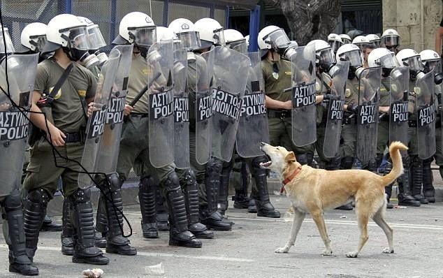 LE CHIEN &quot&#x3B;MILITANT&quot&#x3B; GREC LOUKANIKOS EST MORT