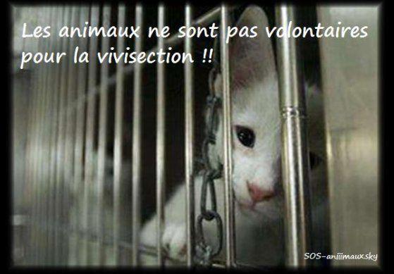 Expérimentation animale en France : un état des lieux