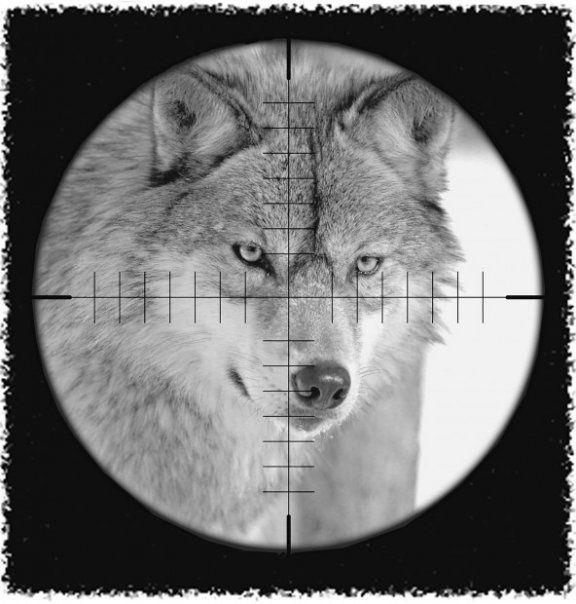 La Nausée : l'Etat offre un déluge de mesures anti-loups à des éleveurs qui menaçaient de bloquer Gap !