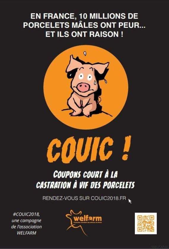 Castration à vif des porcelets: campagne d'affichage censurée en Bretagne