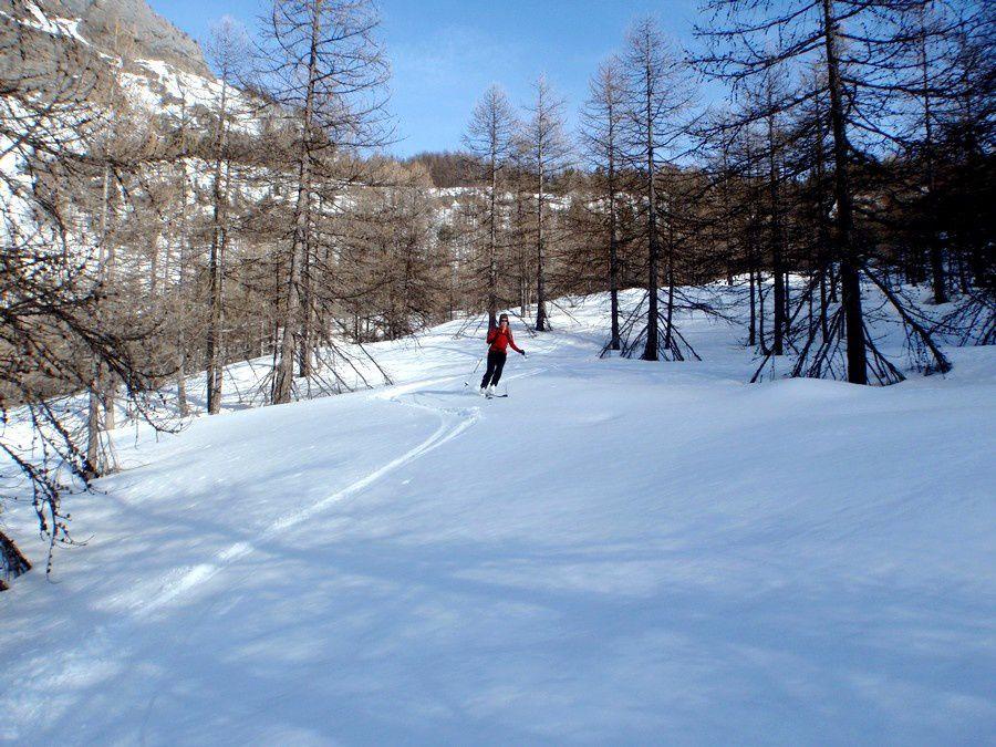 Dans la foret de mélèze d'Allos en fin d'aprés midi, juste avant que la neige transfo ne se reserre pour la nuit.