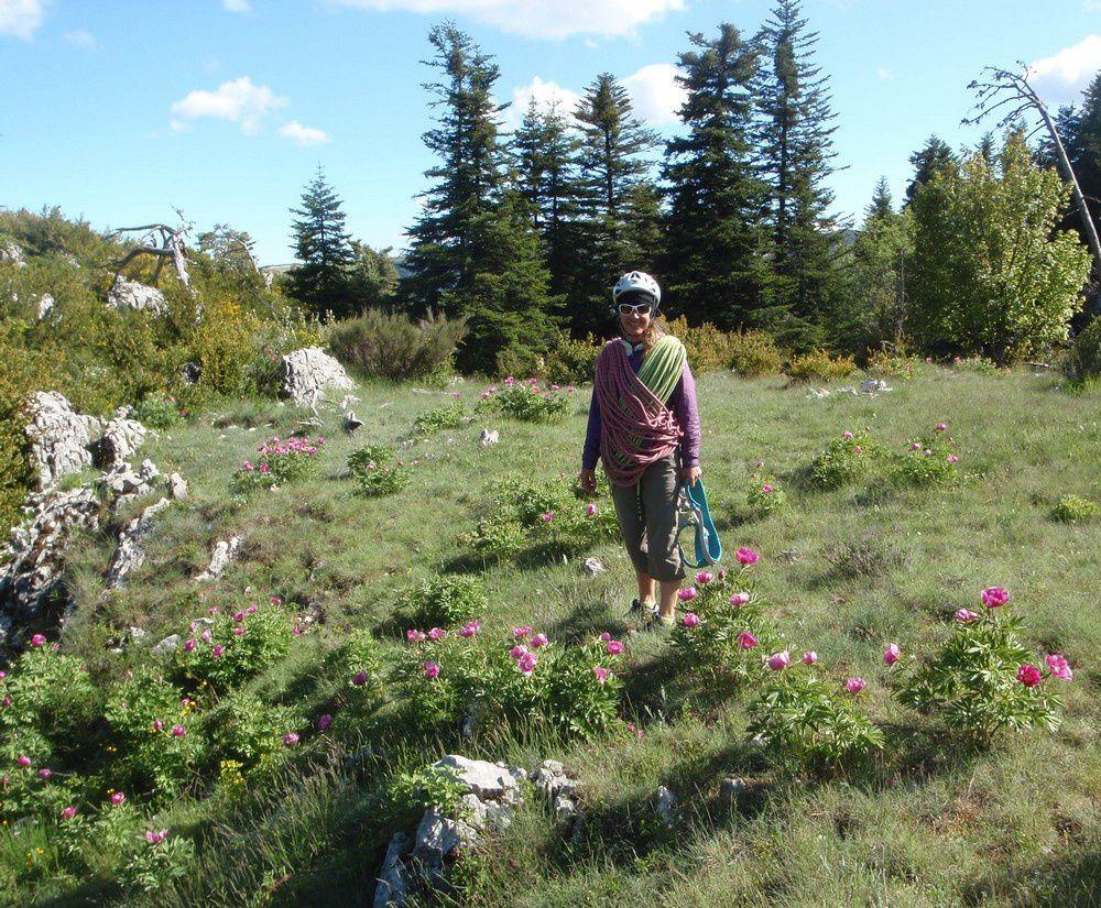 La récompense sur le plateau de la mule: des parterres de fleurs nous accueillent.