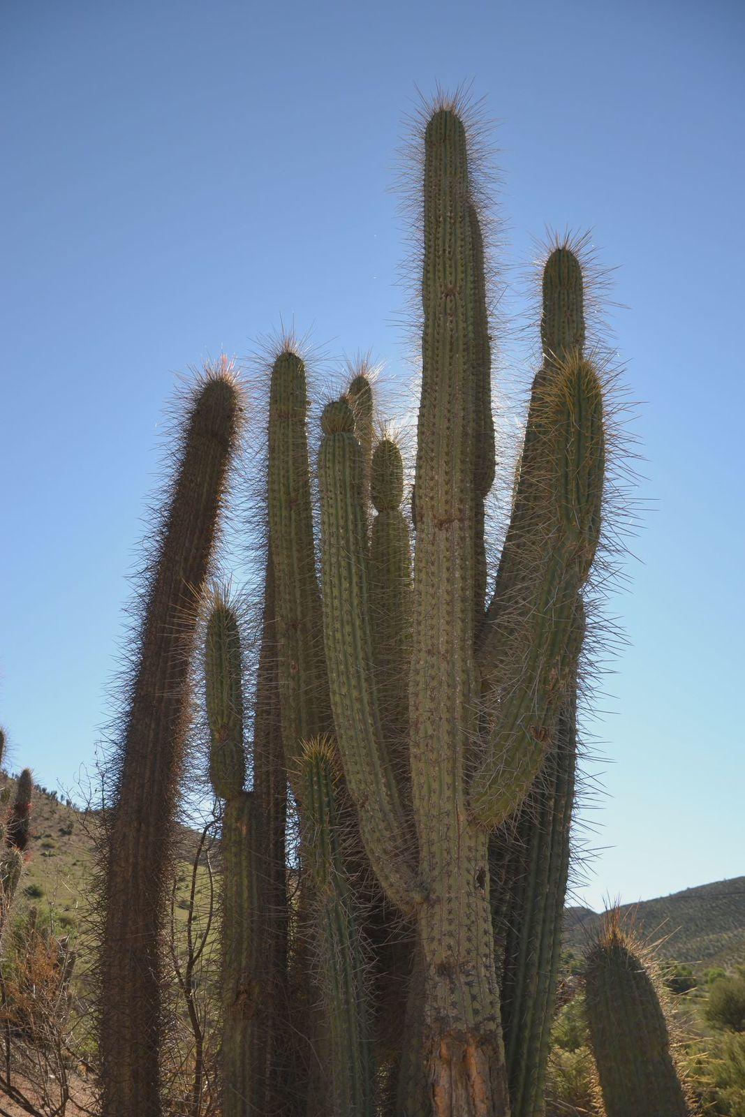 Santiago - Huasco - 972 km