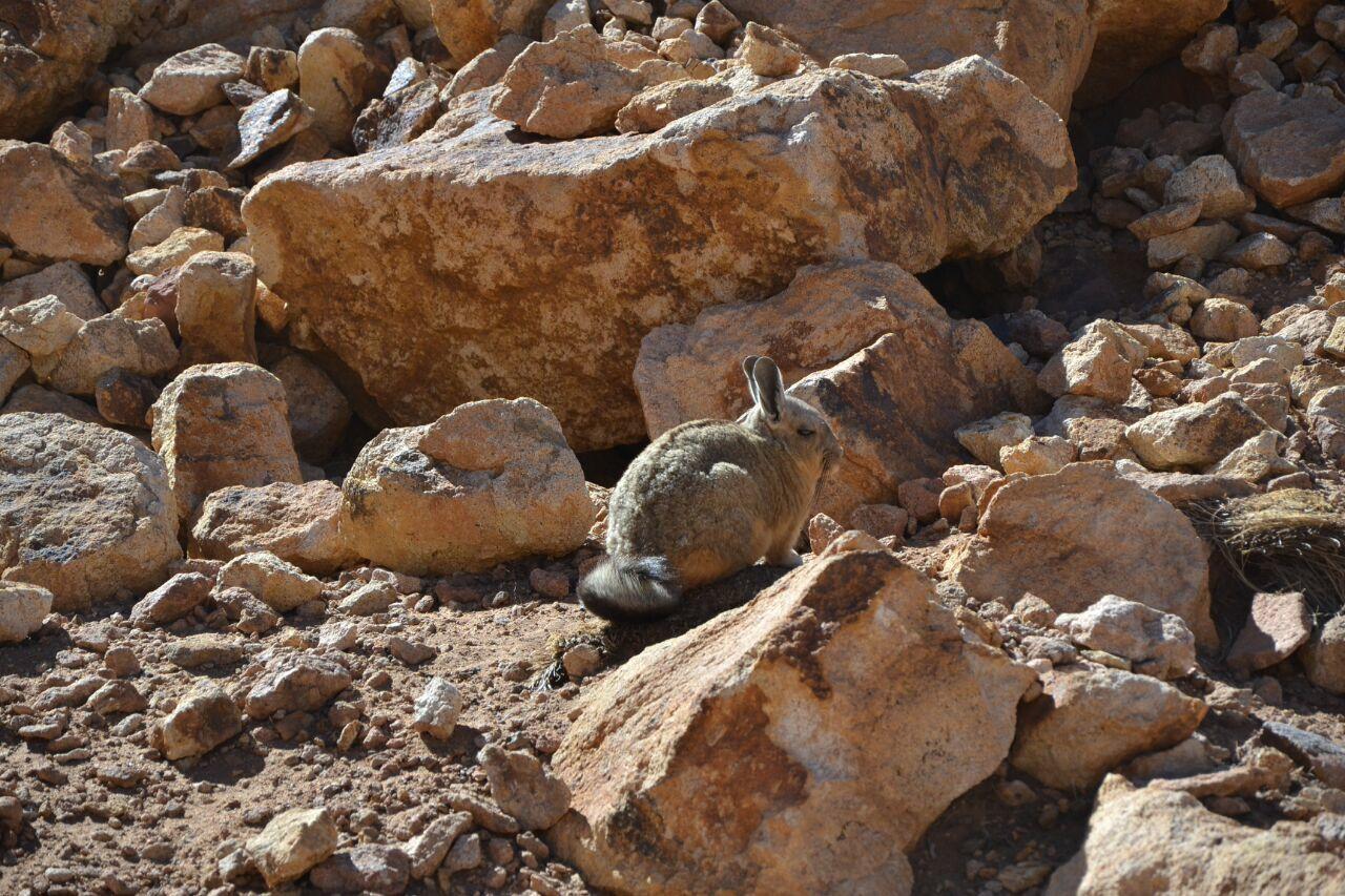 San Pedro de Atacama - Salta (Argentina) - 527km - Balade aux sommets