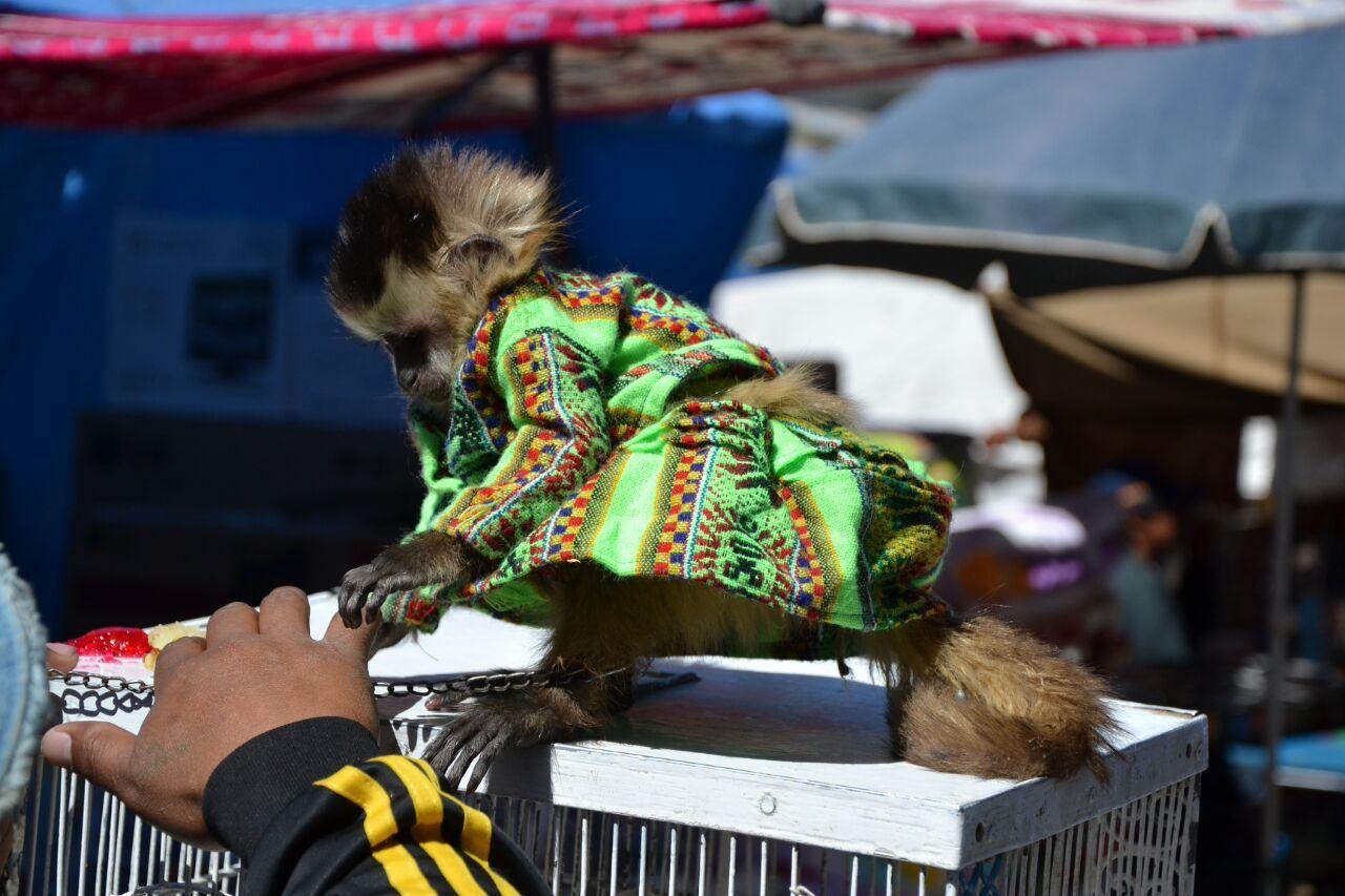 Entracte dominical - Au marché bolivien!