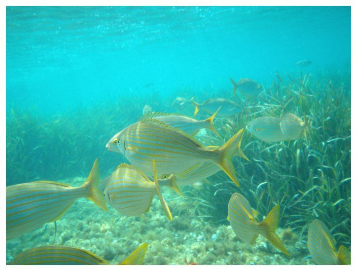Méditerranée 2014 : Ile de Port Cros