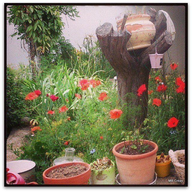 Coquelicots  et nénuphars subliment le jardin (chez ma belle mère)