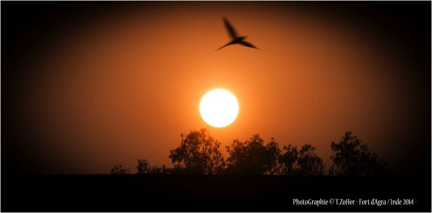 *PhotoGraphie © T.ZoHer - Coucher de soleil / Fort d'Agra / Inde 2014 -