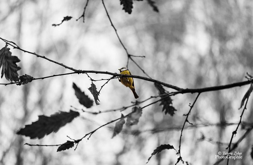© T.Zoher PhotoGraphie - Parc de Bercy village -