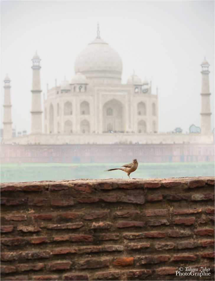 © T.Zoher PhotoGraphie - Agra / Metabagh / Taj Mahal -