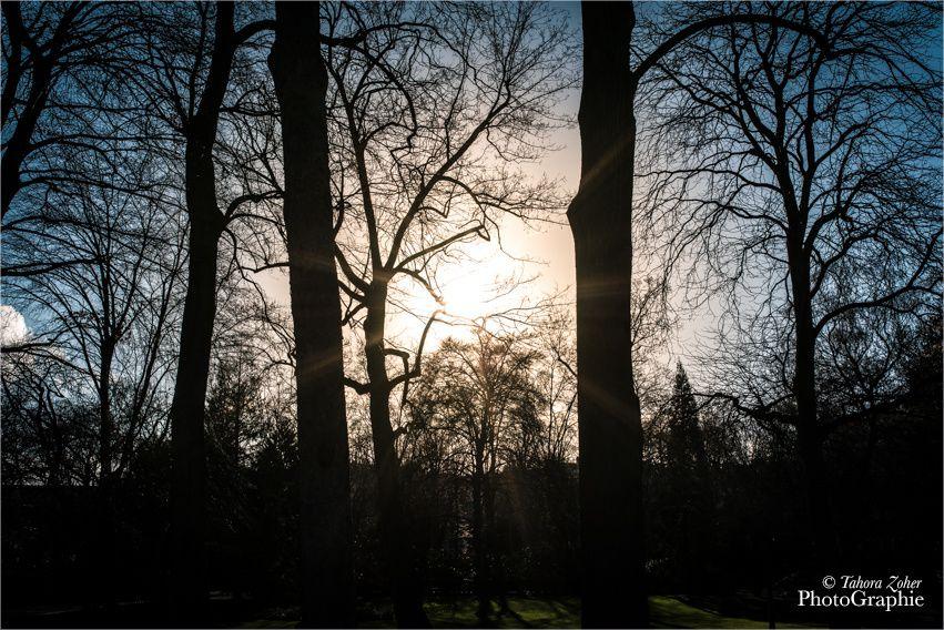 © Tahora Zoher PhotoGraphie - Jardin du Luxembourg 29 Décembre 2015 -
