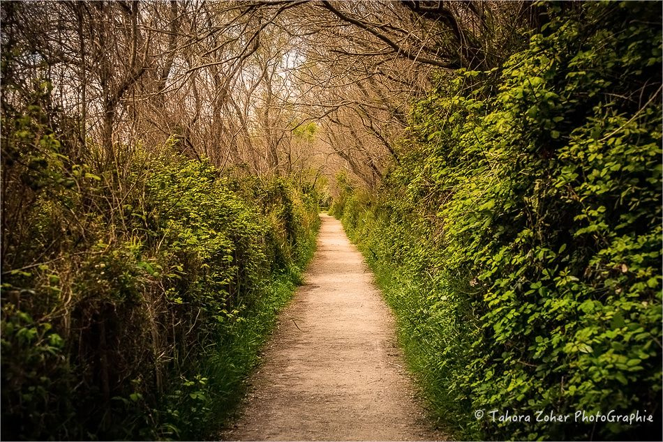 © Tahora Zoher PhotoGraphie - Vision d'un chemin -