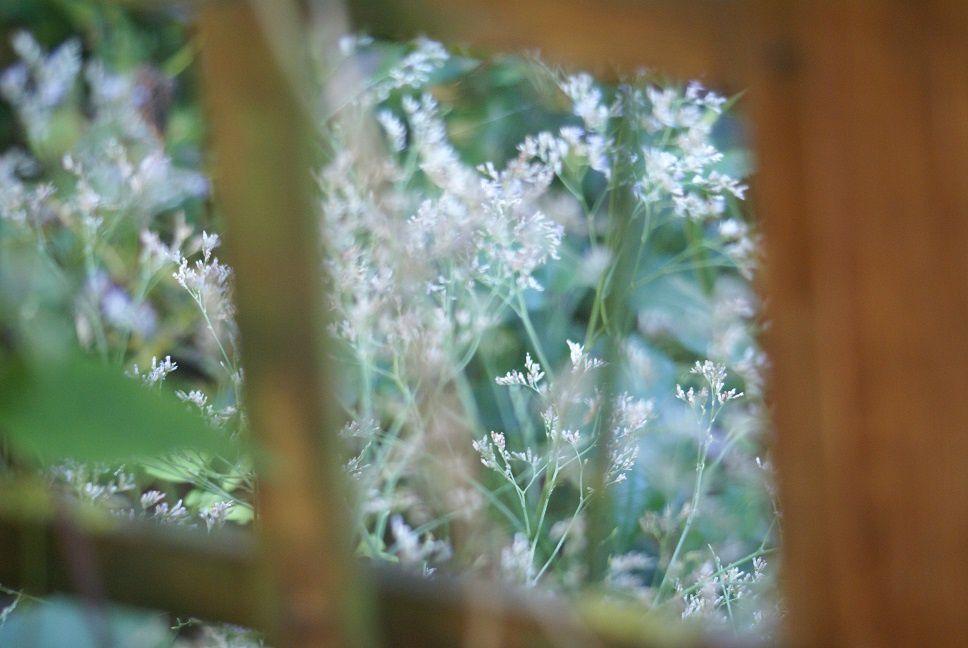 surréalisme...devinez quelle jolie fleur se cache derrière les barreaux ?
