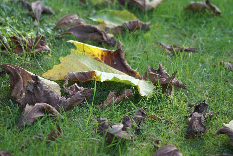 Les feuilles mortes le blog de rosacorleone for Sac pour feuilles mortes