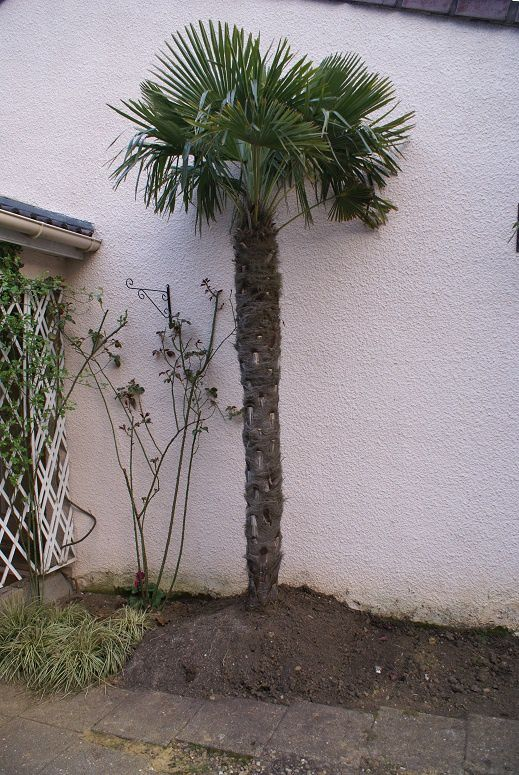 Le palmier de l'entrée