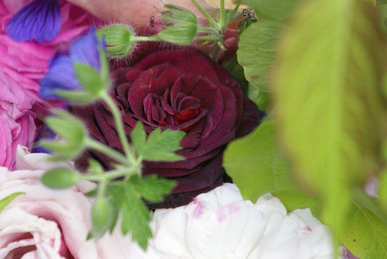 Black baccara in bouquet Léda