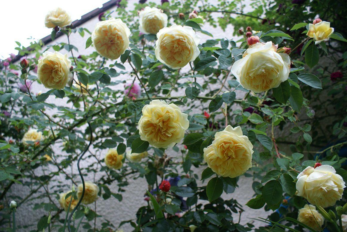 Le blog de Rosacorleone