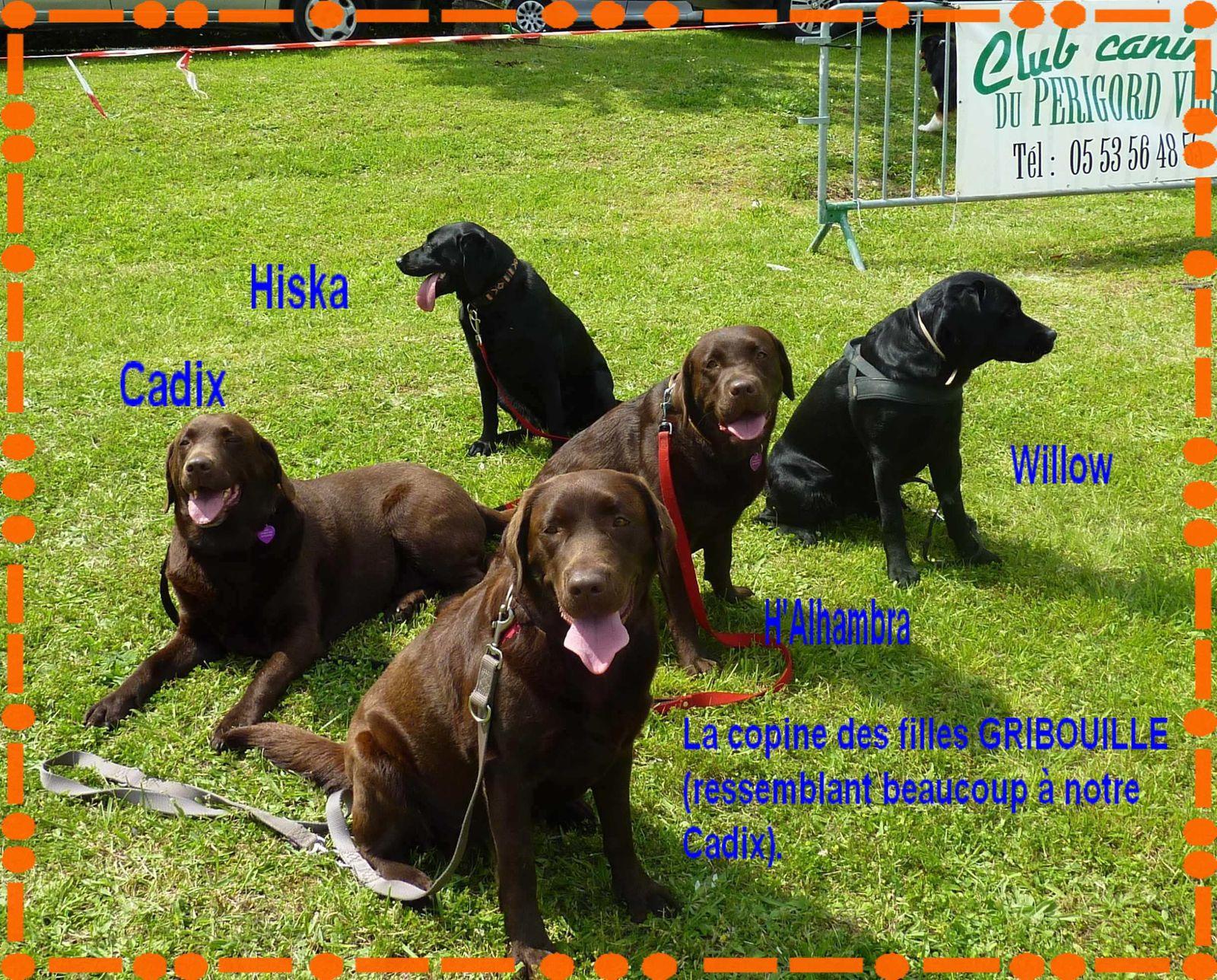 Démonstration de notre club canin à Verteillac.
